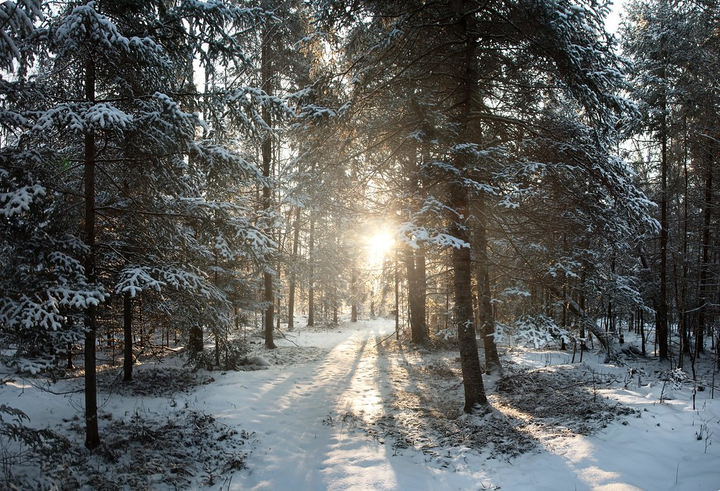 This is a picture of a forested area in Northern Wisconsin, in Winter, covered in snow with the sunlight coming through the trees.